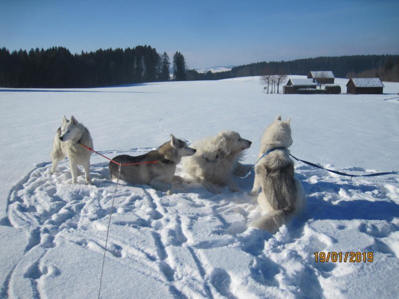 Saskia, Jiro, et leurs copains - Page 28 250