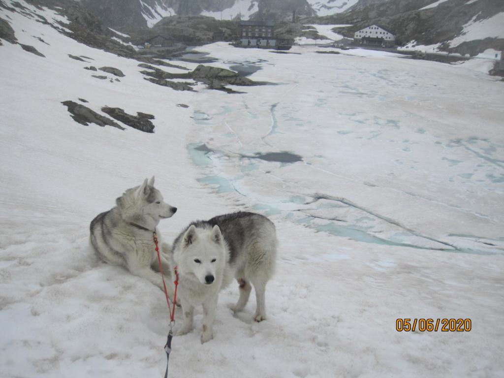 Saskia et Jiro retrouvent la Neige 2613