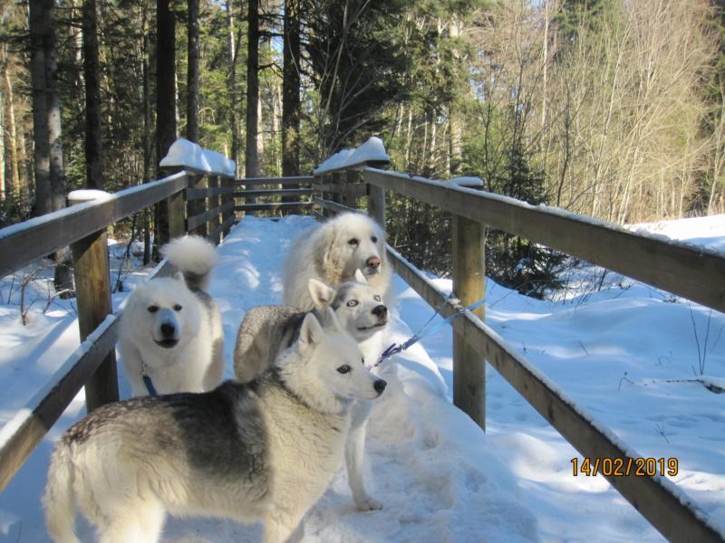 Saskia, Jiro, et leurs copains - Page 30 262