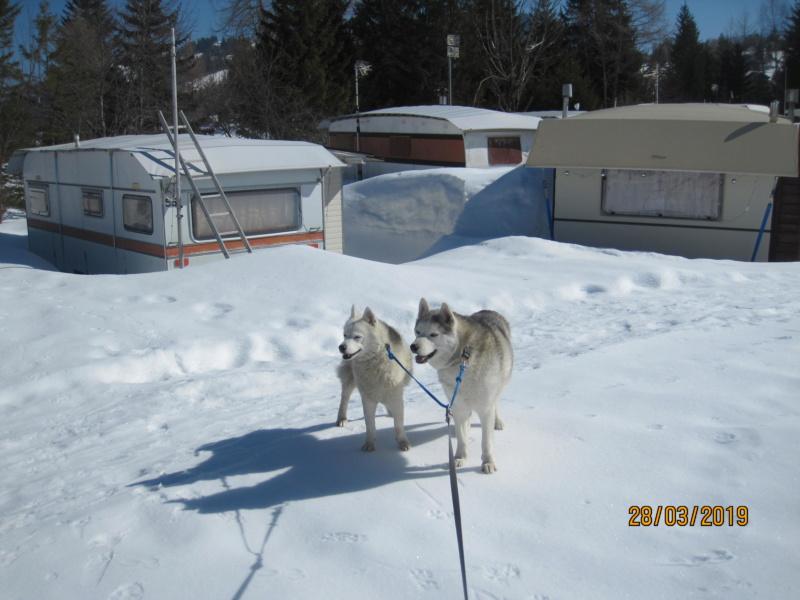 Saskia, Jiro, et leurs copains - Page 33 279