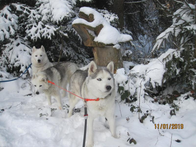 Saskia, Jiro, et leurs copains - Page 27 342