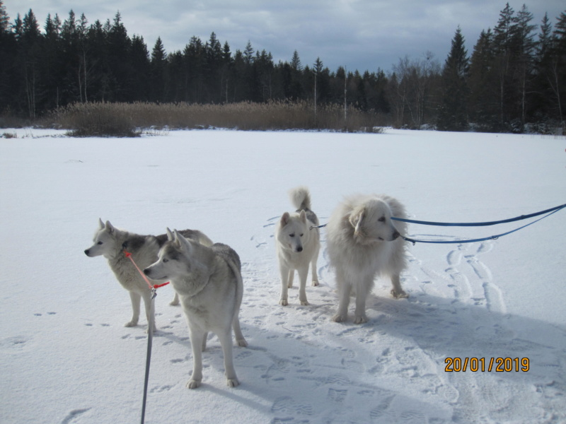 Saskia, Jiro, et leurs copains - Page 28 348