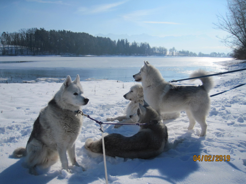 Saskia, Jiro, et leurs copains - Page 29 355