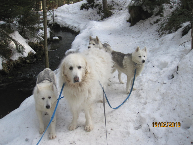Saskia, Jiro, et leurs copains - Page 30 359