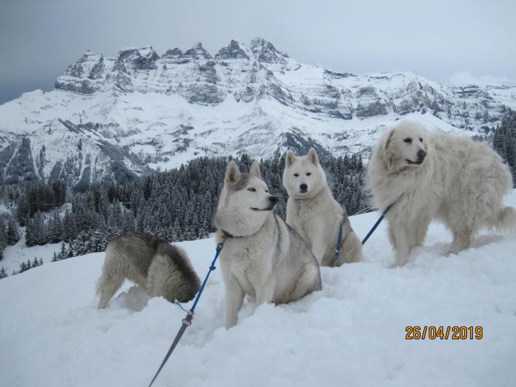 Saskia, Jiro, et leurs copains - Page 33 378