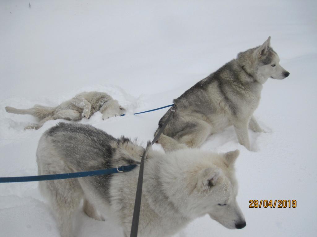 Saskia, Jiro, et leurs copains - Page 33 379