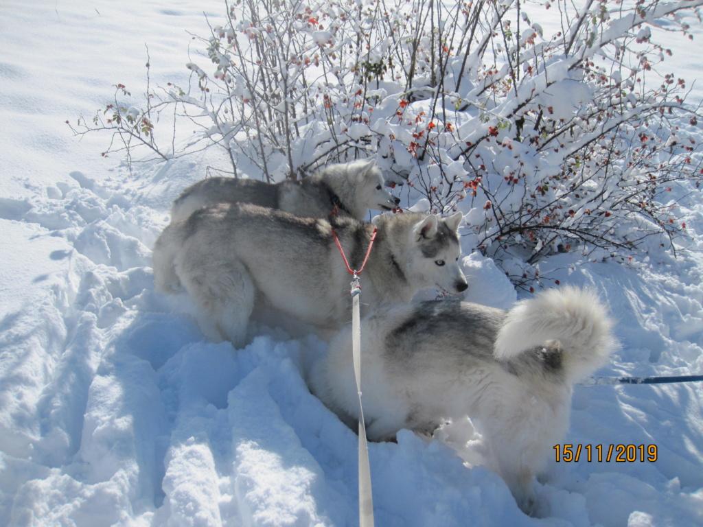 Saskia, Jiro, et leurs copains - Page 36 395