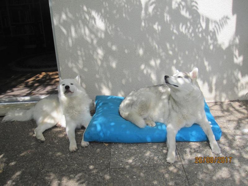 Saskia, Jiro, et leurs copains 411