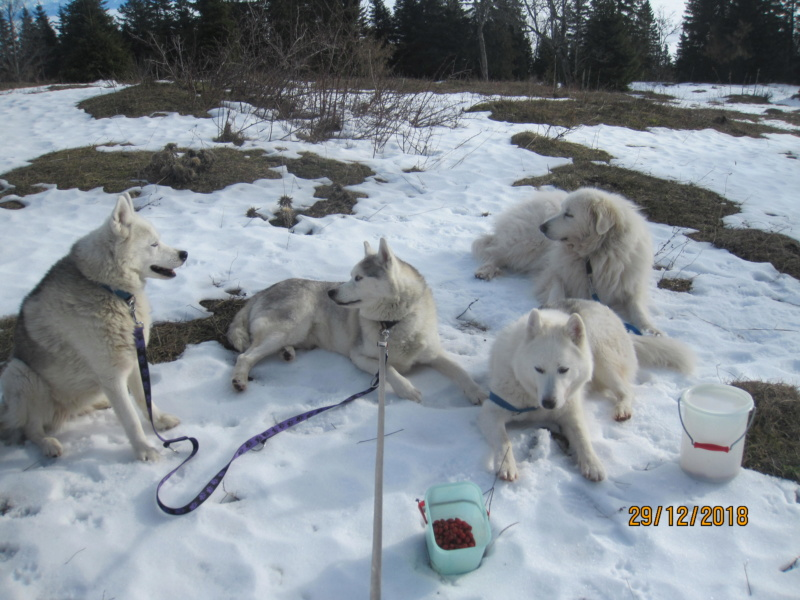 Saskia, Jiro, et leurs copains - Page 26 436