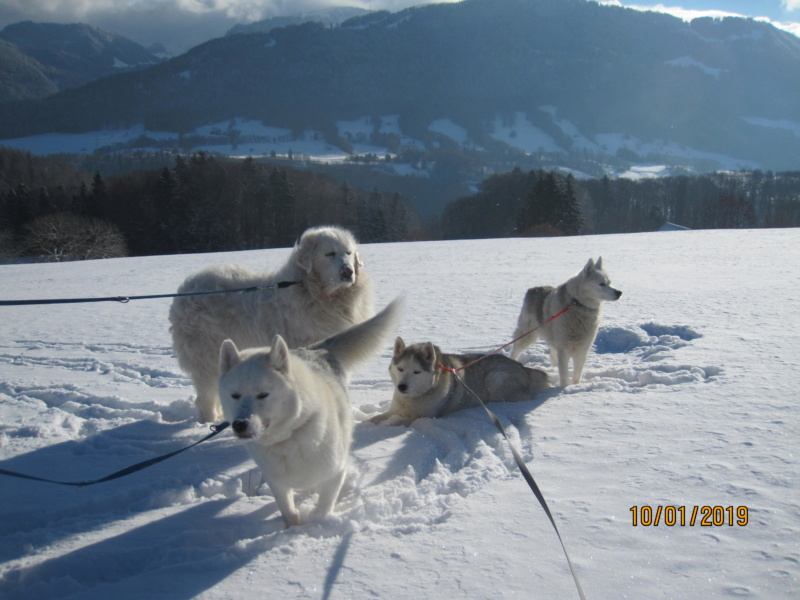 Saskia, Jiro, et leurs copains - Page 27 439