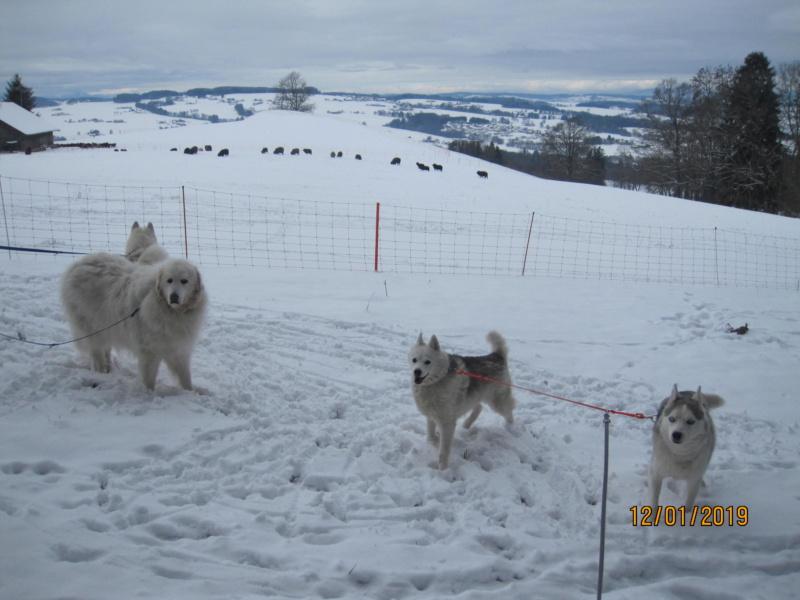 Saskia, Jiro, et leurs copains - Page 27 441