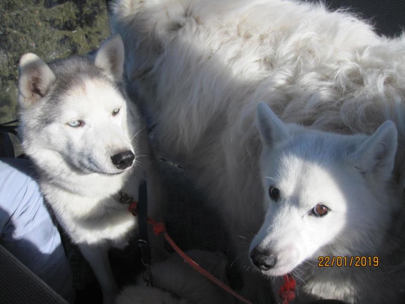 Saskia, Jiro, et leurs copains - Page 28 447