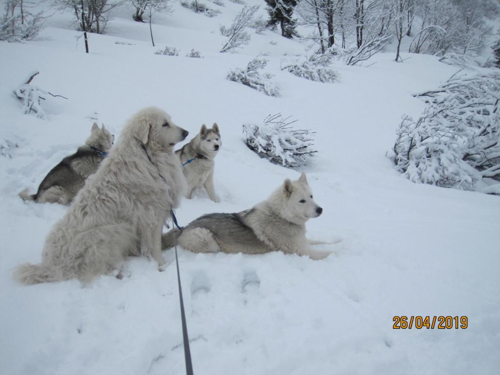 Saskia, Jiro, et leurs copains - Page 33 473