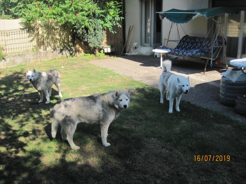 Saskia, Jiro, et leurs copains - Page 34 481