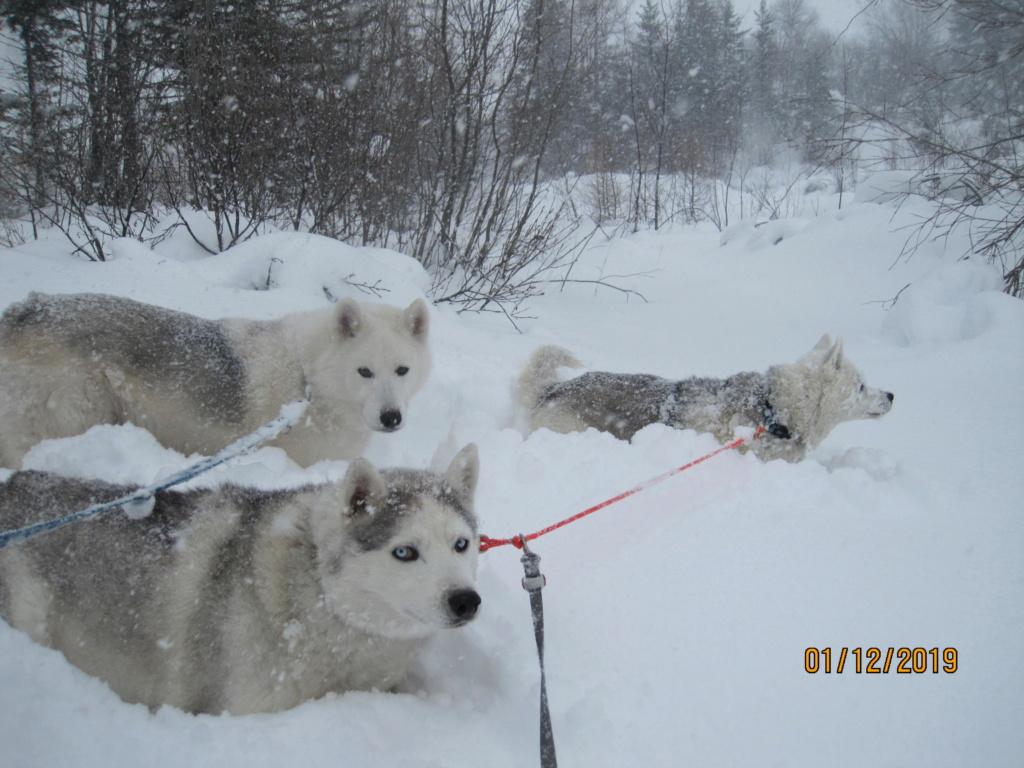 Saskia, Jiro, et leurs copains - Page 37 489