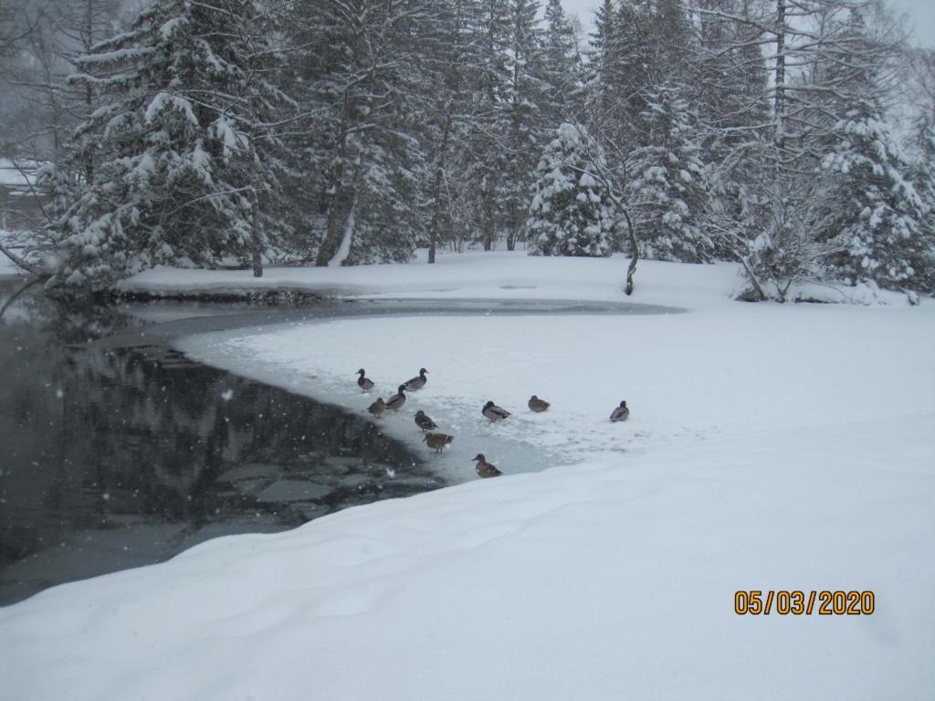 Les Colverts du lac de Champex 493