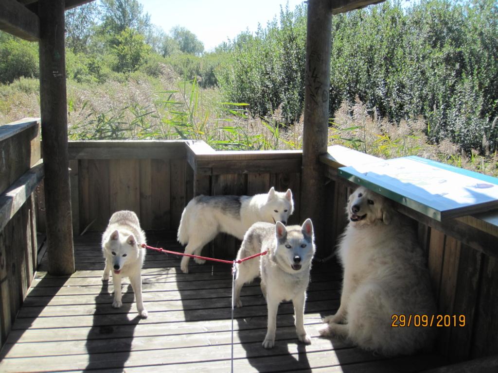 Saskia, Jiro, et leurs copains - Page 35 4_gran10