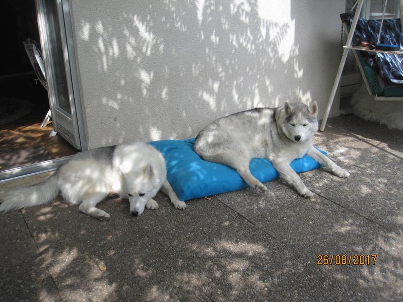 Saskia, Jiro, et leurs copains 510