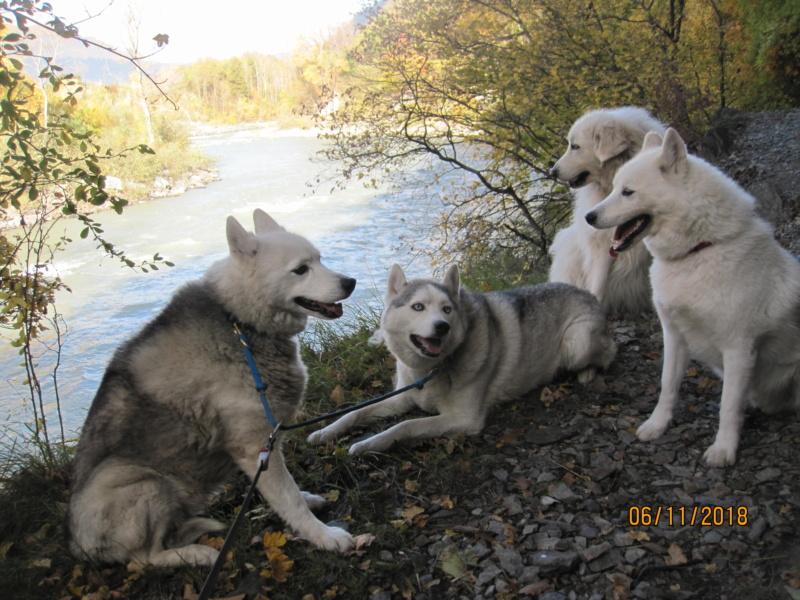Saskia, Jiro, et leurs copains - Page 23 519