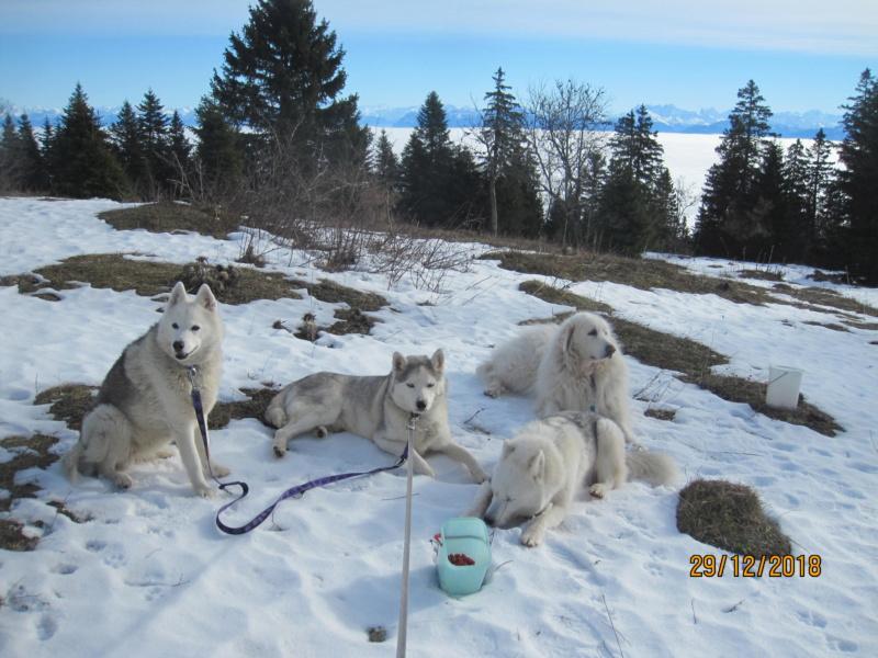 Saskia, Jiro, et leurs copains - Page 26 531