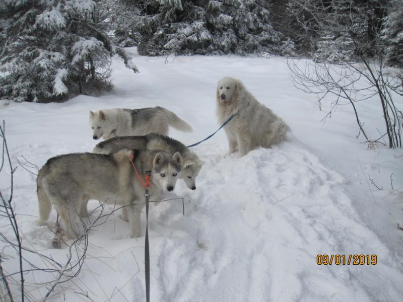 Saskia, Jiro, et leurs copains - Page 27 533