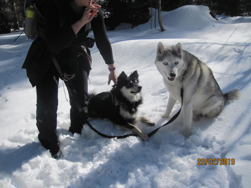 Saskia, Jiro, et leurs copains - Page 30 551
