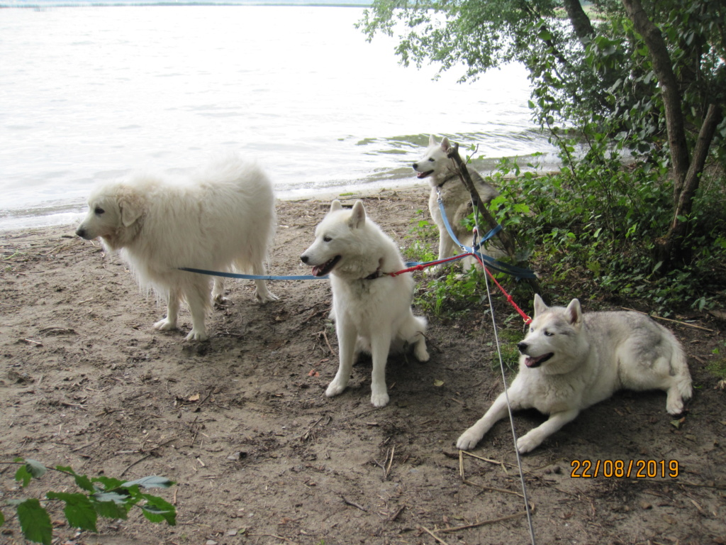 Saskia, Jiro, et leurs copains - Page 35 5_meyr10