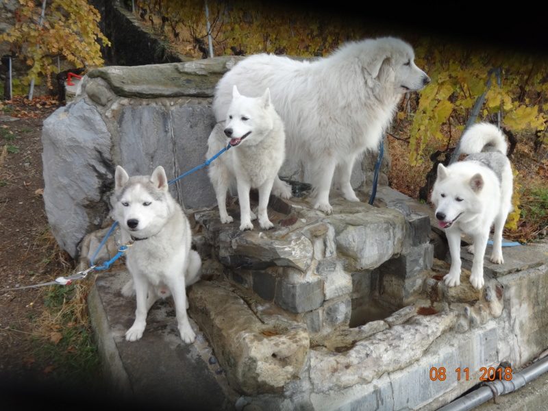 Saskia, Jiro, et leurs copains - Page 23 617