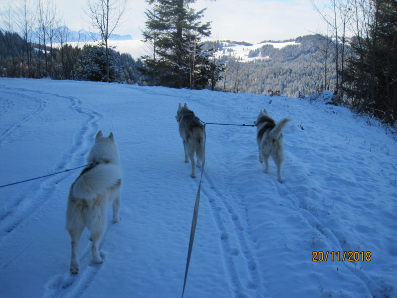 Saskia, Jiro, et leurs copains - Page 23 618