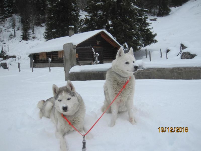 Saskia, Jiro, et leurs copains - Page 25 625