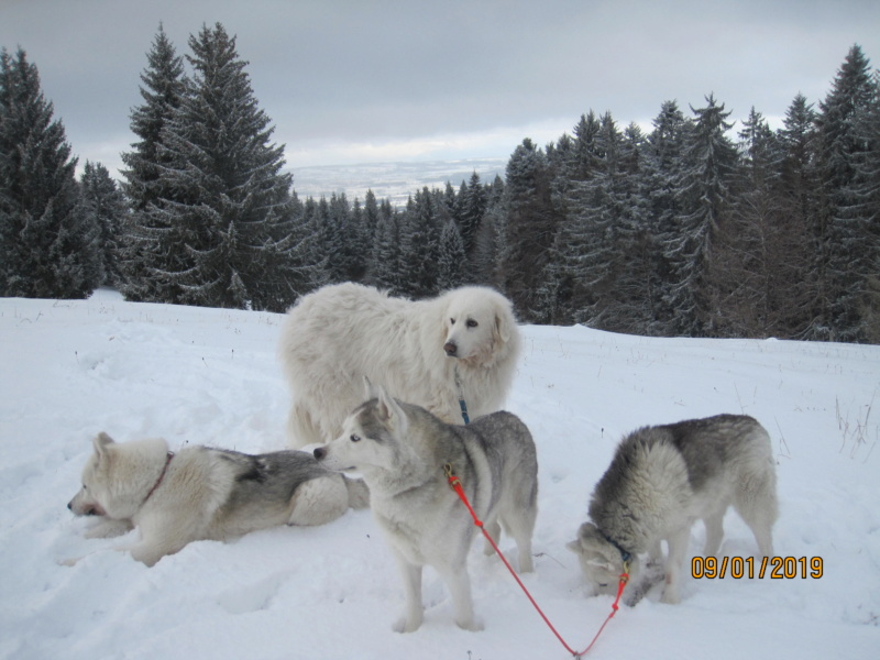 Saskia, Jiro, et leurs copains - Page 27 631