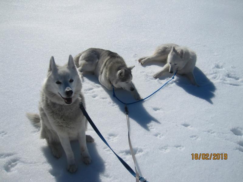 Saskia, Jiro, et leurs copains - Page 30 641