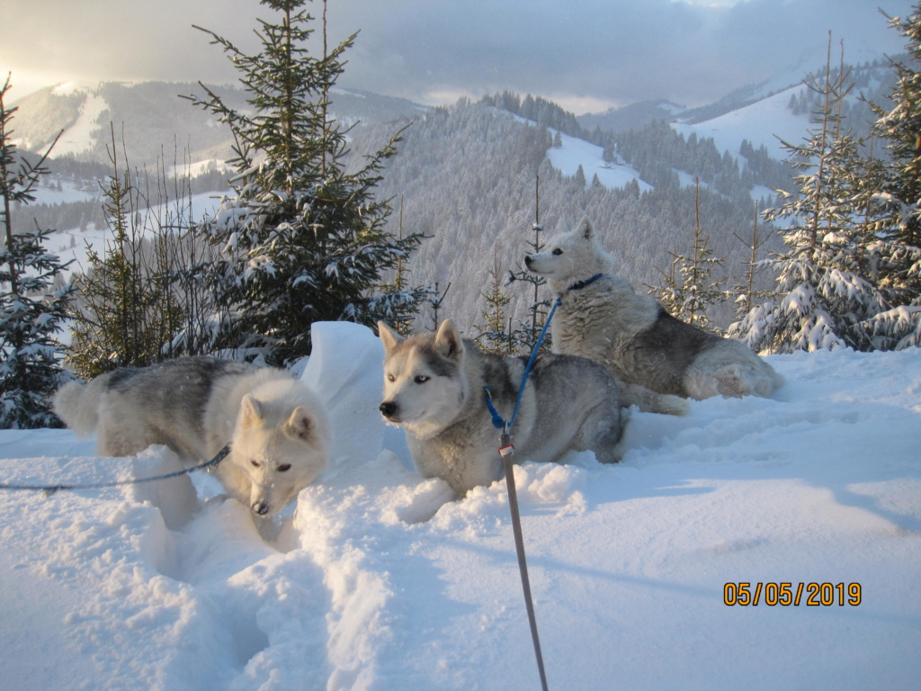 Saskia, Jiro, et leurs copains - Page 34 656