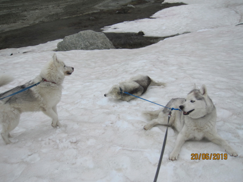 Saskia, Jiro, et leurs copains - Page 34 661