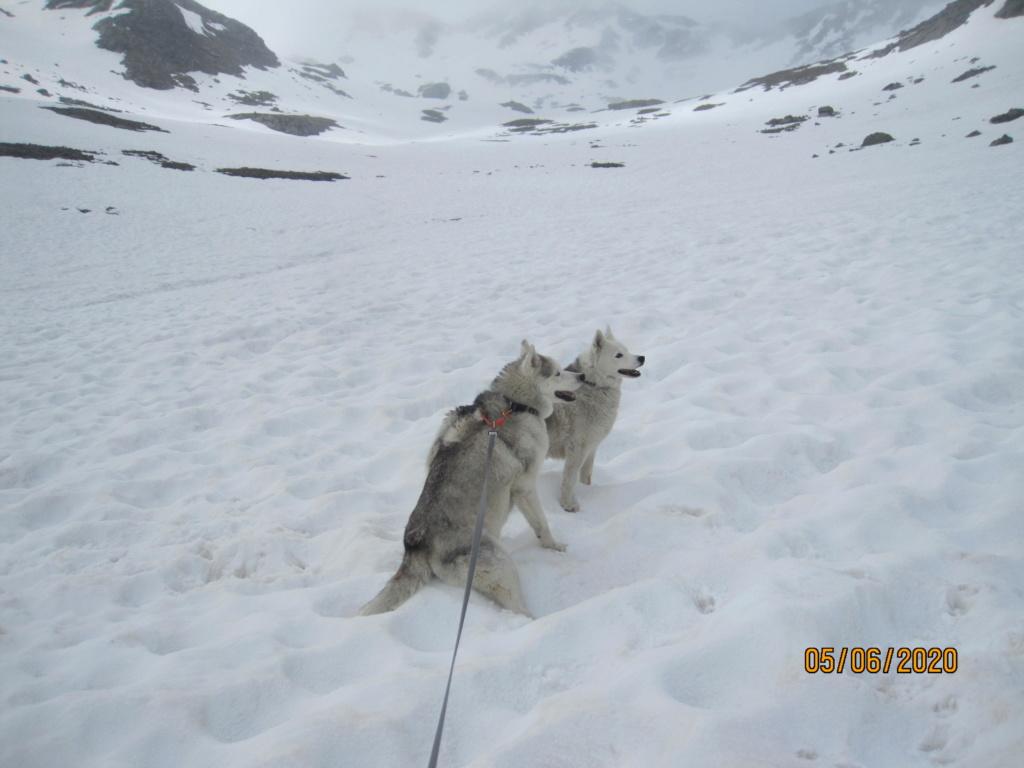 Saskia et Jiro retrouvent la Neige 670
