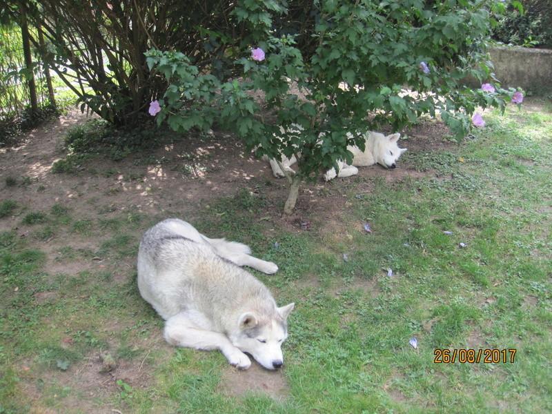 Saskia, Jiro, et leurs copains 711