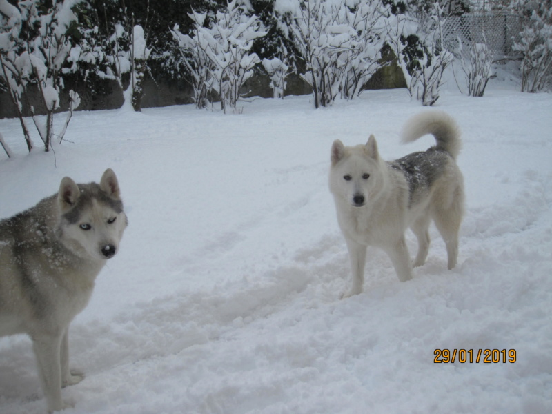 Saskia, Jiro, et leurs copains - Page 29 733
