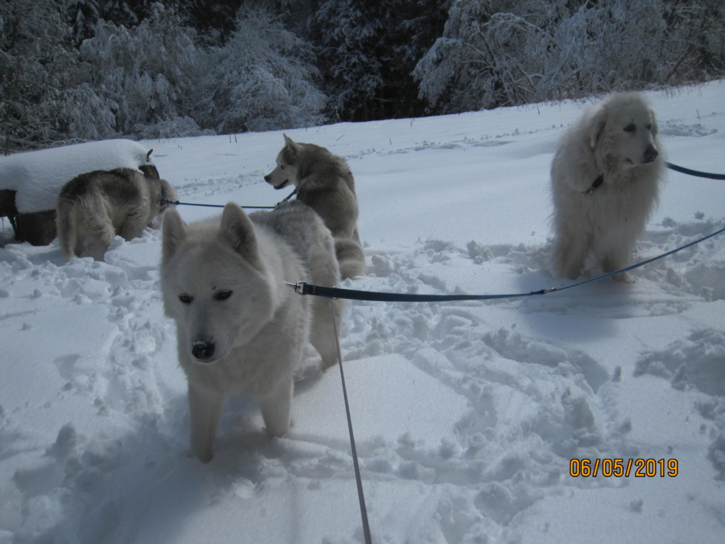 Saskia, Jiro, et leurs copains - Page 34 843