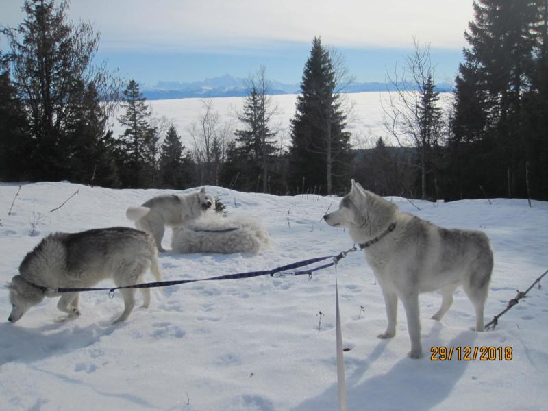 Saskia, Jiro, et leurs copains - Page 26 920