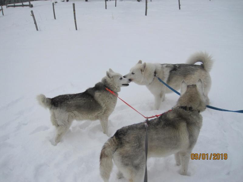 Saskia, Jiro, et leurs copains - Page 27 923