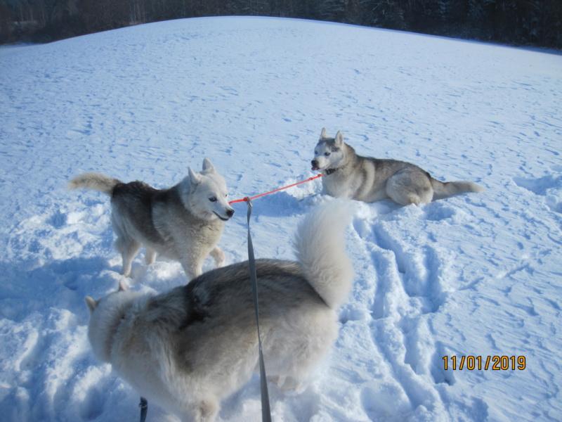 Saskia, Jiro, et leurs copains - Page 27 924