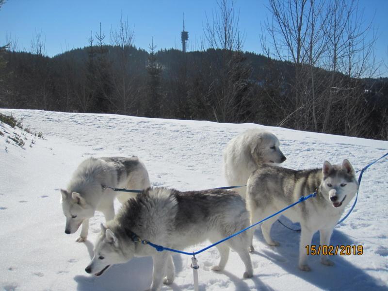 Saskia, Jiro, et leurs copains - Page 30 9_l_an10