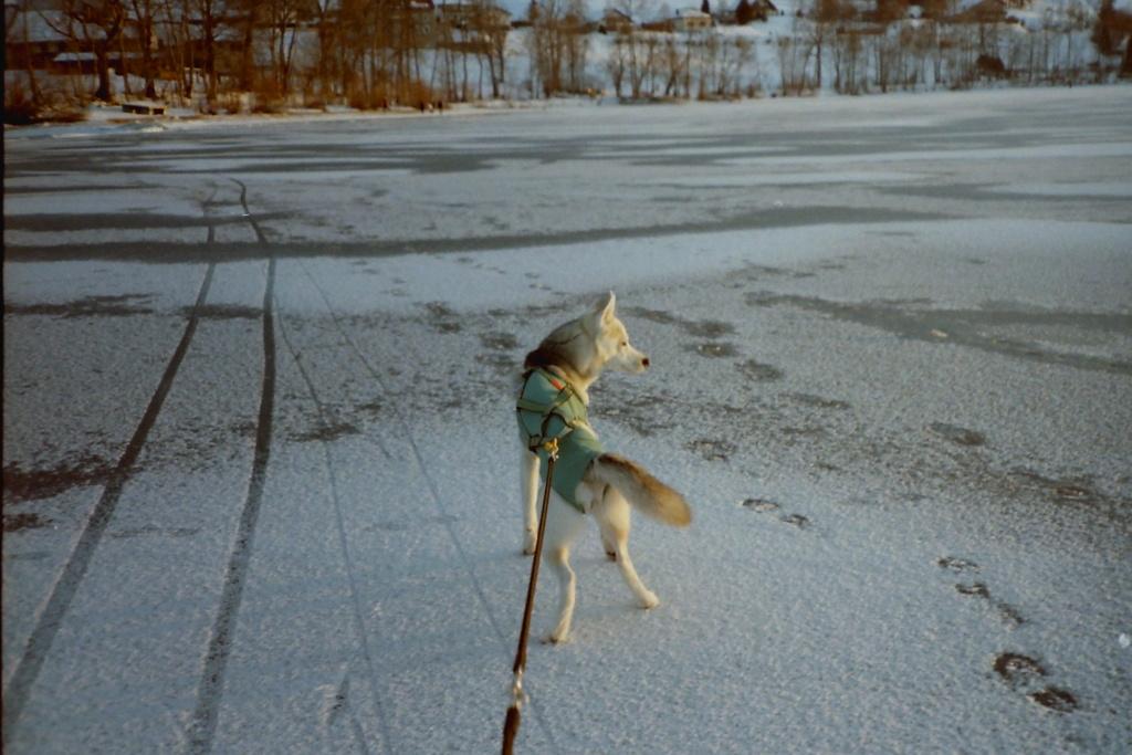 La disparition de Saskia, chère petite louve... Lac_de13