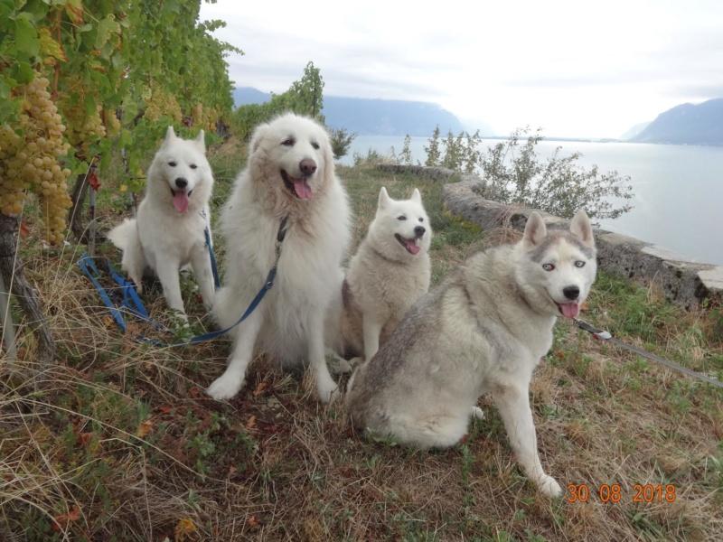 Saskia, Jiro, et leurs copains - Page 21 Les_4_10