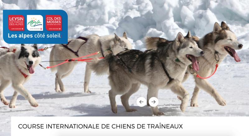 Course internationale de traîneaux à Chiens - Les Mosses - Suisse Mosses12