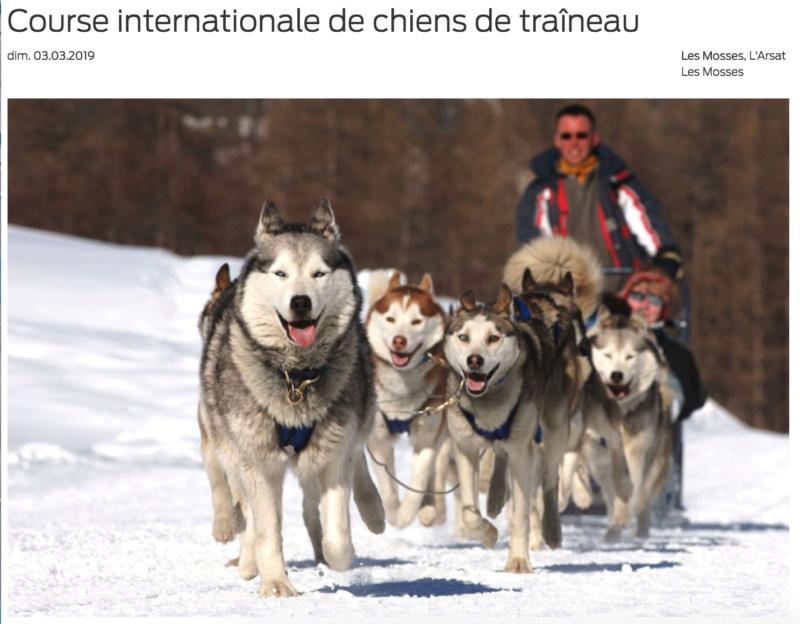 Course internationale de traîneaux à Chiens - Les Mosses - Suisse Mosses13