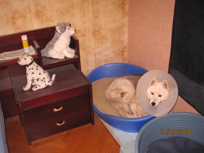 Saskia, Jiro, et leurs copains - Page 20 Saskia10