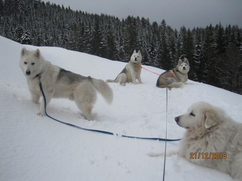 Saskia, Jiro, et leurs copains - Page 26 Sous_l10