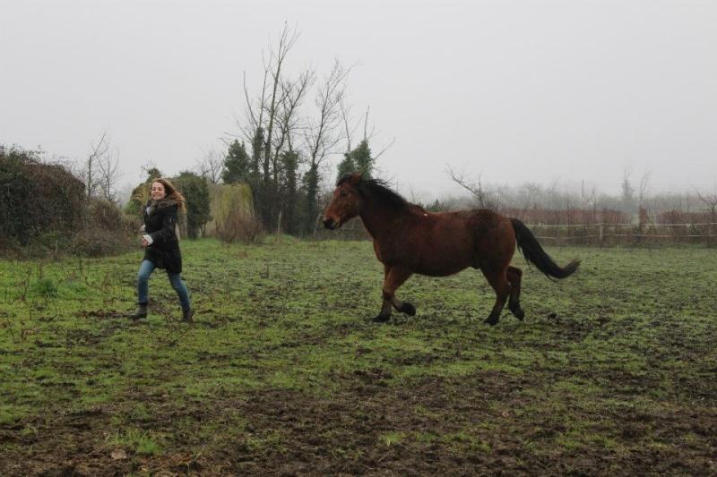 Comment faire cabrer mon cheval ? 19664011