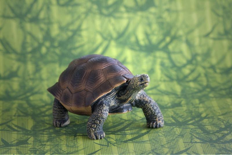 Mojo fun tortoise 2017 - walk around by Ana _mg_6920